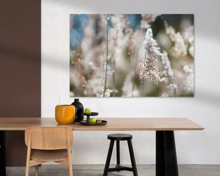Sfeerimpressie: Rustgevende scherpte diepte in bloemenveld van Dexter Reijsmeijer