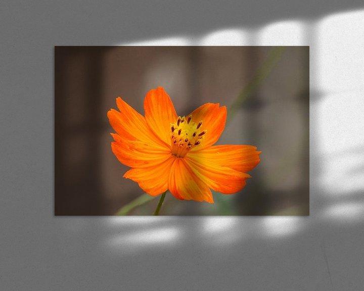 Sfeerimpressie: marigold van Erich Werner