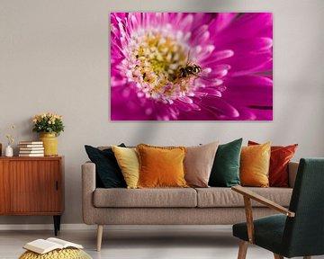 Insekt auf der Blume von Marieke de Boer