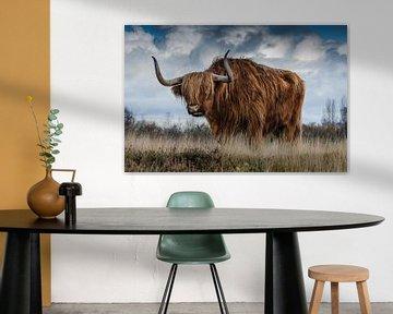 Schotse Hooglander von Michel van der Vegt