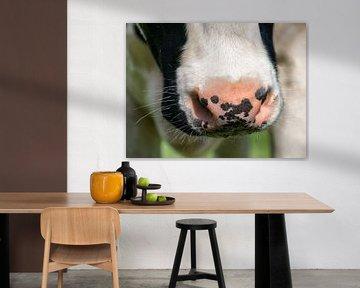Nasse Nase Kuh II von Jessica Berendsen