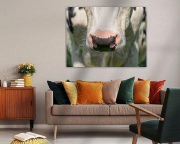 Nasse Nase Kuh III von Jessica Berendsen
