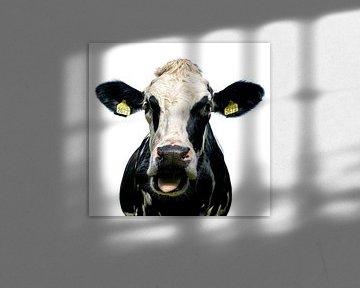 Neugierige Küh von Jessica Berendsen