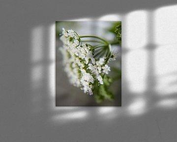 Bloeiend zevenblad von Bianca Muntinga