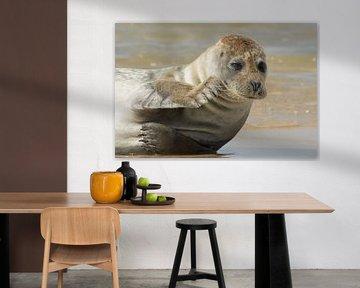 Grijze zeehond pinkt een traantje weg von Art Wittingen