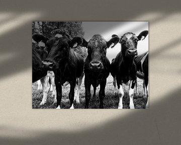 neugierige Kühe in einer Reihe von Jessica Berendsen