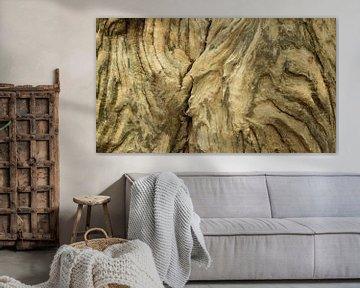 Verwittertes Holz des alten Baumstammes