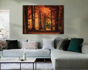 Herfst in Nederland van ProphotographyNL .