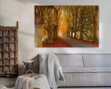 Schöne Herbstfarben von Caroline Lichthart