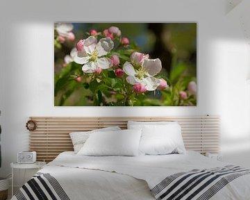 Apfelblüten von Susanne Bauernfeind