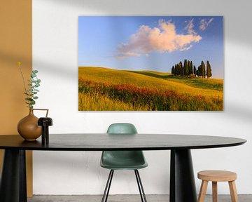 Cipress bomen, Torrenieri, Toscane, Italië van Henk Meijer Photography