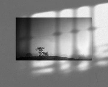 Eenzame boom op een heuvel op de Veluwe von Theo Klos