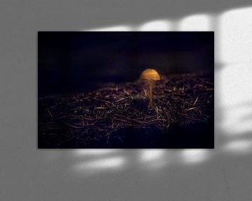 Allein im Dunkeln von Tim Abeln
