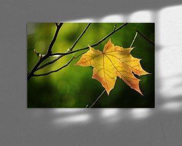 Gouden herfstblad