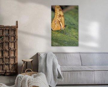 Tropische vlinder  von Anita Moek