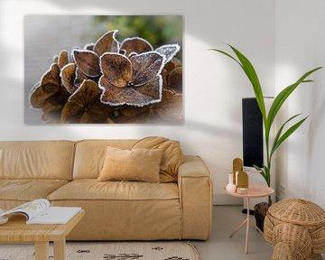 Winterse hortensia met rijp von Bianca Muntinga