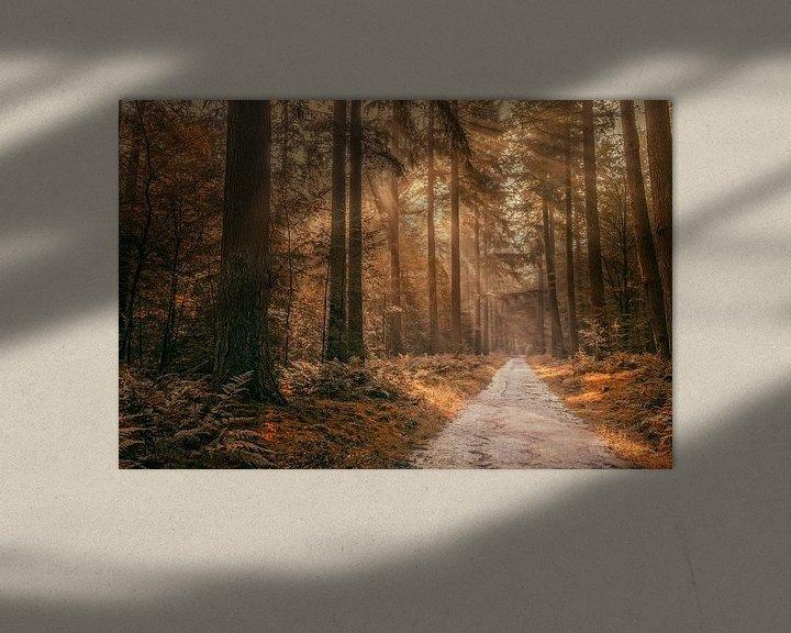 Sfeerimpressie: Autumn in the forest van Tim Abeln