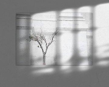 Olijfboom, Olive tree, Olivo von Sense Photography