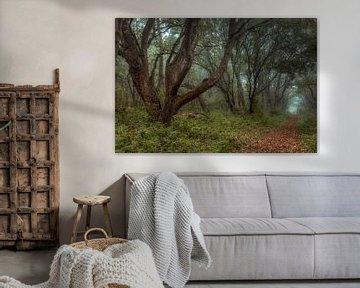 Mystiek in het bos van Peter Korevaar