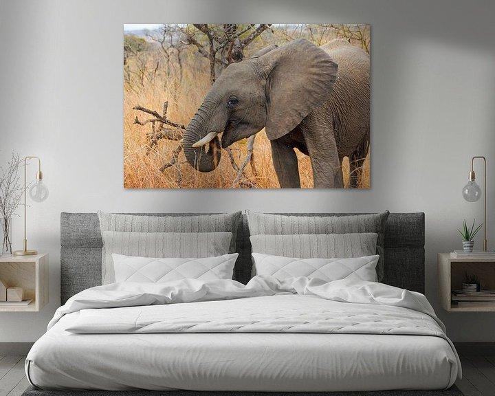 Sfeerimpressie: Olifant Zuidafrika van Paul Franke
