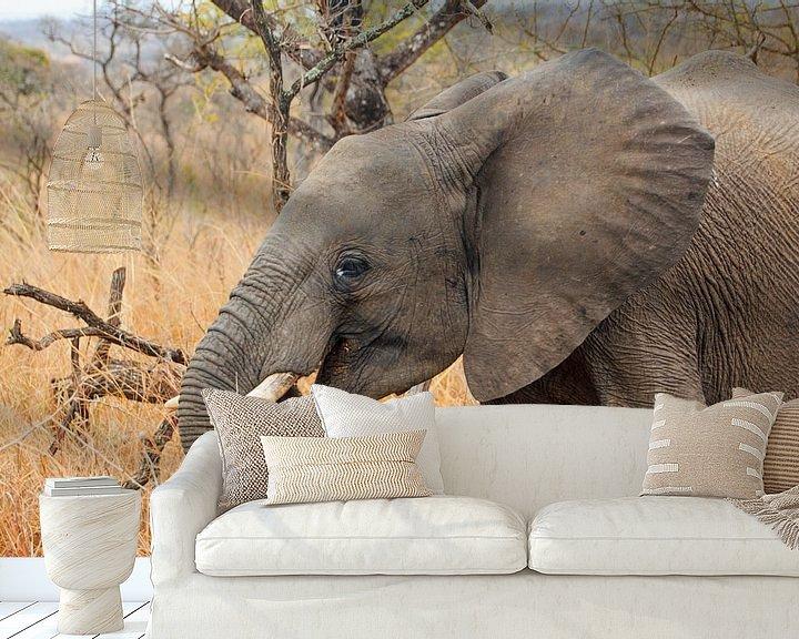 Sfeerimpressie behang: Olifant Zuidafrika van Paul Franke