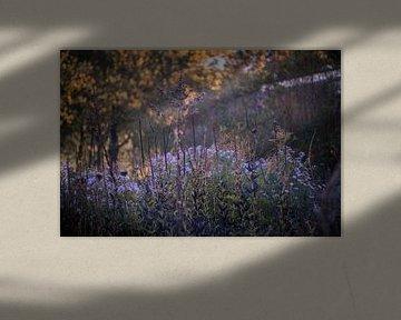 Kleuren van de herfst van Gertjan Hesselink