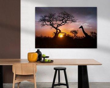 Sunset Giraffe van Thomas Froemmel