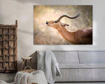 Antilope van Thomas Froemmel