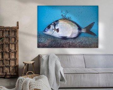 Verse vis van Marcel van Balken