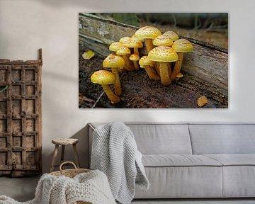 Herfst, Autumn, Mushroom van Yvonne Balvers