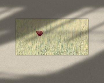 Der rote Mohn von Martin Bergsma