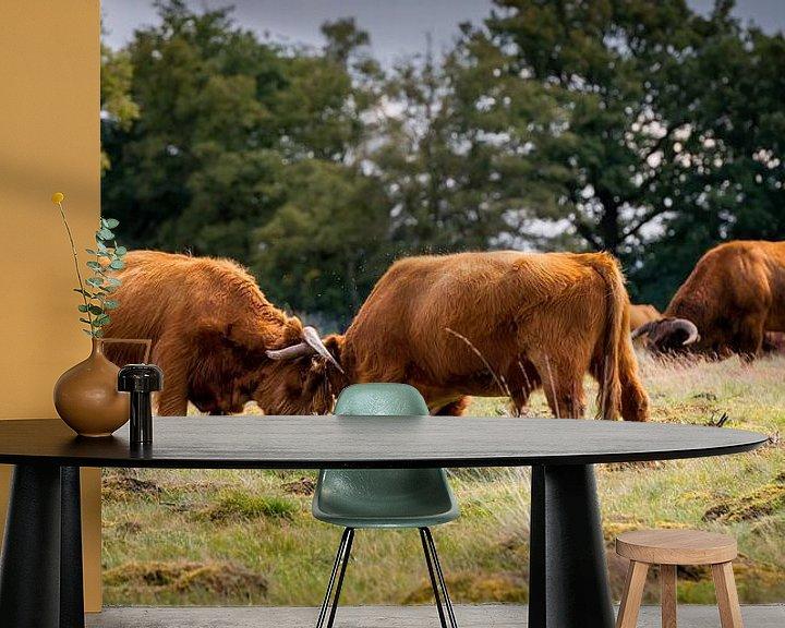 Impression: Combattre les jeunes taureaux sur Jenco van Zalk