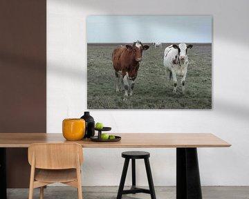 29. Randgebiet, Noarderleech, rotköpfige Kühe.