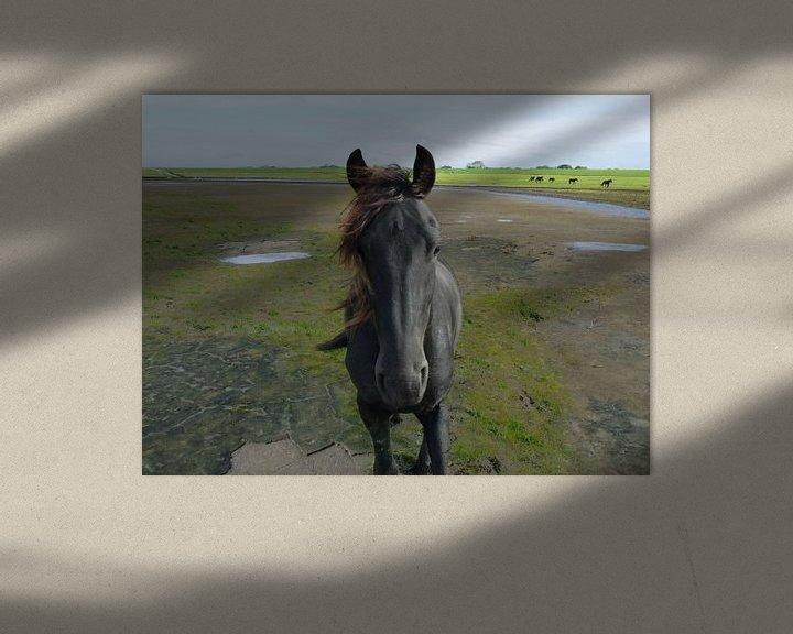 Beispiel: 31. Außenbereich, Noarderleech, friesisches Pferd. von Alies werk