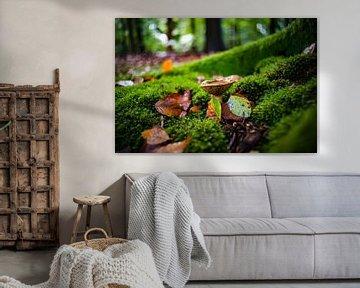 Herfst scene met mos en paddestoelen van Fotografiecor .nl