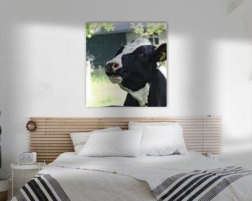 koe in Lottum van Marleen De Wandeleer