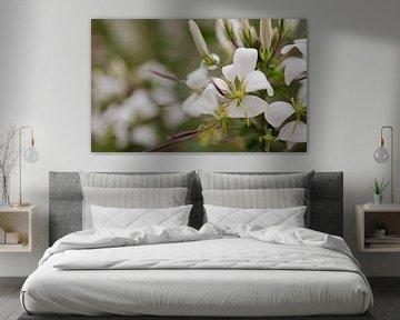 white flowers von Eugene Lentjes