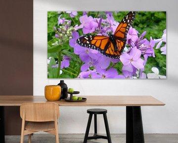 Oranje met zwart vlinder in harskamp von Wilbert Van Veldhuizen