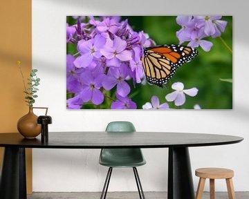 Een vlinder eet een bloesem op van een plant van Wilbert Van Veldhuizen