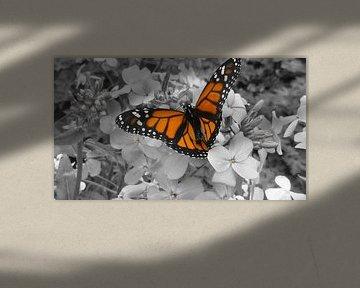 Vlinder zichtbaar gemaakt doormiddel van een zwartwit foto  von Wilbert Van Veldhuizen