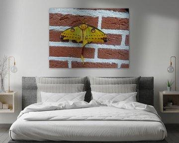 Een vlinder die tegen de muur aanzit. von Wilbert Van Veldhuizen