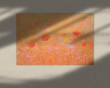 Mohnblumen von Francis Dost
