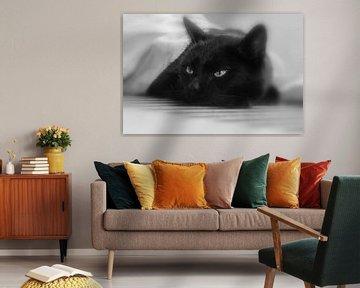 kater in zwart wit  von Bianca Muntinga