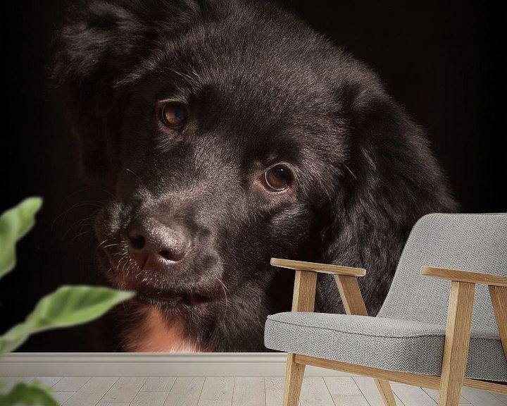 Sfeerimpressie behang: Puppy Love van Eddie Meijer