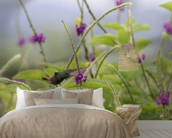 Sfeerimpressie behang: Kolibrie van Eddie Meijer
