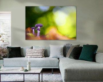 paarse paddestoeltjes in een sprookjesachtig kleurrijk herfsttafereel van Jessica Berendsen