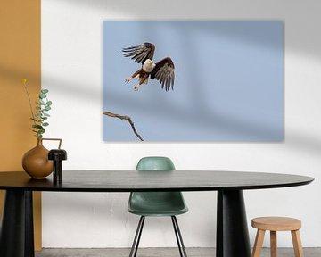 Afrikanischer Seeadler von Francis Dost