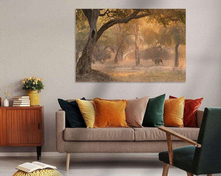 Sfeerimpressie: Magisch bos. van Francis Dost