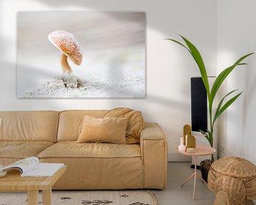 Duinfranjehoed paddenstoel van Judith Borremans