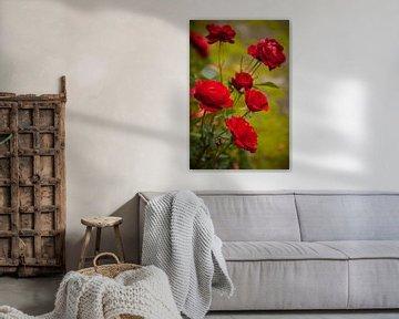 Herfst rozen van Ada Zyborowicz